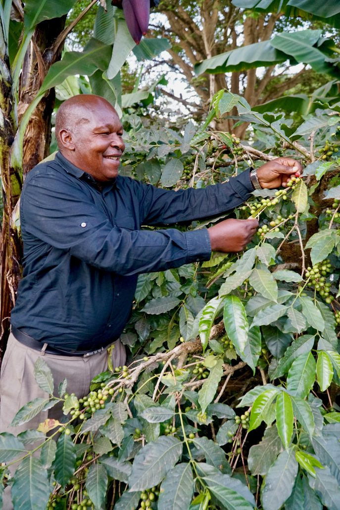 Direkt bezogener Kaffee, Spezialitätenkaffee Witten, Fair ohne Siegel, Tansanischer Kaffee